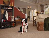 Phenix Griffith Park Carpet