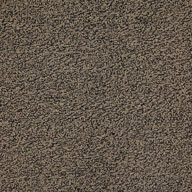 Coffee Major Factor Carpet Tile