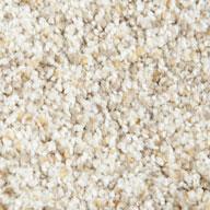 Golden Dawn Phenix Griffith Park Carpet