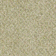Seedling Shaw Natural Path Outdoor Carpet