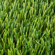 Field/Apple GreenCalabasas Turf Rolls